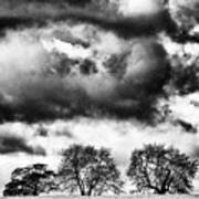 Three Tree Tops Landscape Art Print