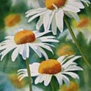Three Wild Daisies Print by Sharon Freeman