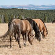 Three Wild Mustangs Art Print