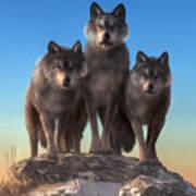 Three Wolves Watching You Art Print