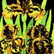 Three Yellow-black Irises, Painting Art Print