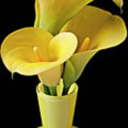 Three Yellow Calla Lilies Art Print by Garry Gay