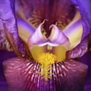 Throat Of The Iris Art Print