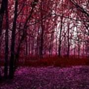 Through A Forest Art Print