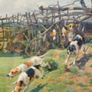 Through The Fence Art Print by Arthur Charles Dodd