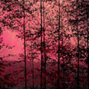 Through The Forest, Rose Art Print