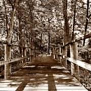 Through The Narrow Path  Art Print