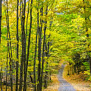 Through Yellow Woods Art Print