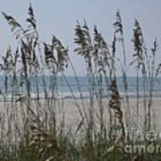 Thru The Sea Oats Art Print