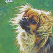 Tibetan Spaniel And Cabbage White Butterfly Art Print