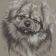Tibetan Spaniel Art Print