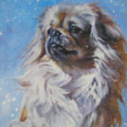 Tibetan Spaniel In Snow Art Print