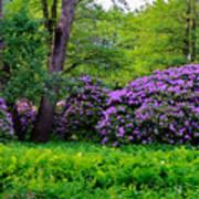 Tiergarten In Spring Art Print