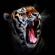 Tiger 10 Art Print