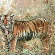 Tiger - 28 Art Print