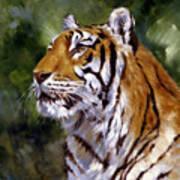 Tiger Alert Art Print