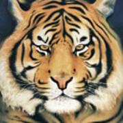 Tiger At Midnight Art Print