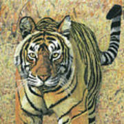 Tiger Burning Bright  Art Print