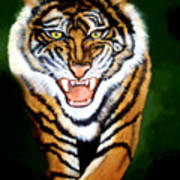 Tiger Charging Art Print