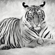 Tiger Cub At Rest Art Print