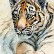 Tiger Cub Portrait 865 Art Print