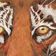 Tiger Eyes 2 Art Print