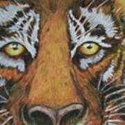 Tiger Eyes Art Print