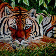 Tiger In Jungle Art Print