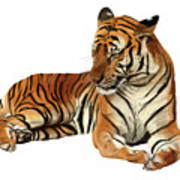 Tiger In Repose Art Print