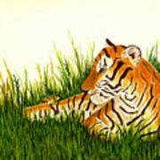 Tiger In Wait Art Print