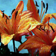 Tiger Lilies After The Rain - Painted Art Print