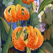 Tiger Lily Parachutes Art Print