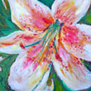 Tiger Lily Passion Art Print