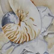 Tiger Nautilus Art Print