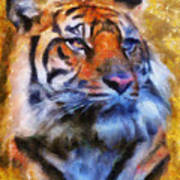 Tiger Portrait Print by Jai Johnson