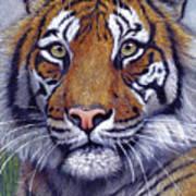 Tiger Portrayal Art Print