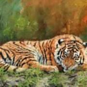 Tiger Repose Art Print