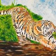 Tiger Stretching Art Print