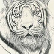 Tigerlily Art Print