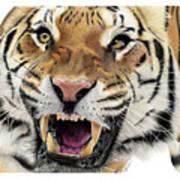 Tigers Pace Art Print