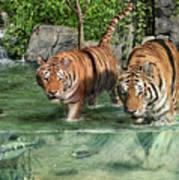 Tiger's Water Park Art Print