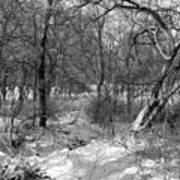 Timberland Infrared No3 Art Print