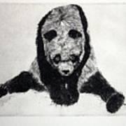 Timido Panda Art Print