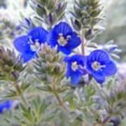 Tiny Blue Floral Art Print