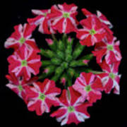 Tiny Bunch Of Red And Pink Flowers Art Print