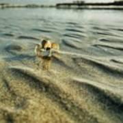 Tiny Crab In Water Art Print