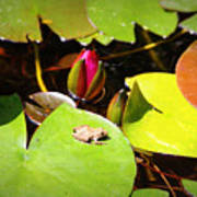 Tiny Frog Art Print