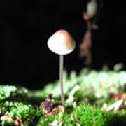 Tiny Mushroom 2 Art Print