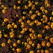 Tiny Yellow Flowrers On The Desert Floor Art Print