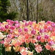 Tiptoe Among The Tulips Art Print